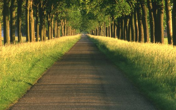 road, alley, path, road, alley, path, nature, landscapes, tree, Trees, beautiful wallpaper for your desktop, distance