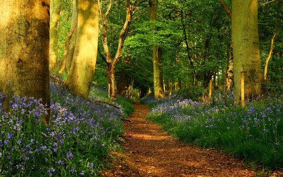 footpath, trail, road, Flowers, forest, Trees, trunks, fence, spring, nature