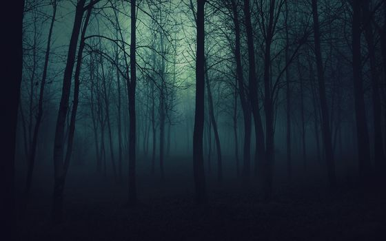 forest, Trees, darkness, evening