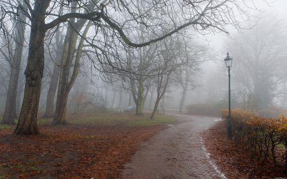 park, fog, autumn