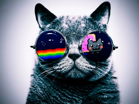nyan cat, cat, glasses