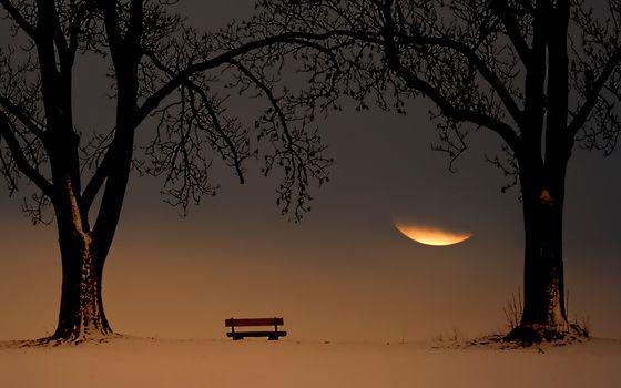 Trees, snow, bench