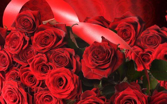 розы, цветы, букет, подарок, лента, красные