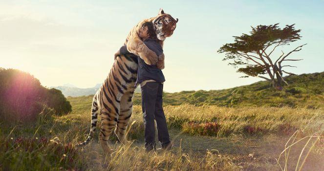 Тигр, человек, объятие, встреча, принт, дерево, поле