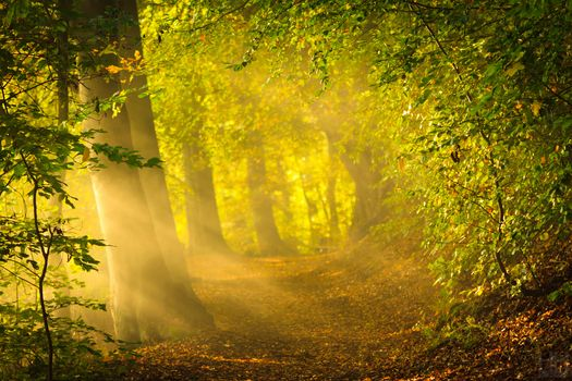 nature, early autumn, Morning, sun, rays, forest, glare, Trees, foliage