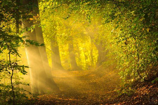 природа, ранняя осень, утро, солнце, лучи, лес, яркий свет, деревья, листва