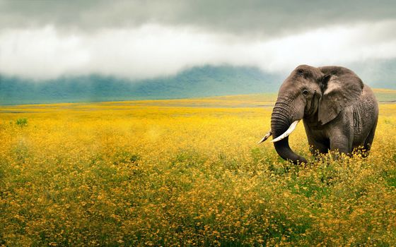 field, Flowers, yellow, sky, elephant