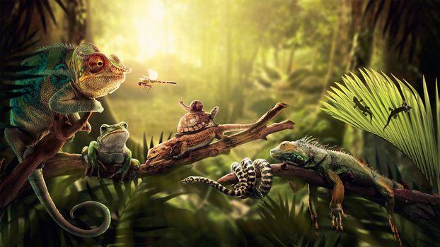 jungle, fern, light, Iguana, Lizards, turtle, Dragonfly, snake, Snail, Frog