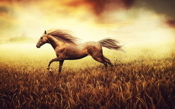 freedom of spirit, field, horse, wheat, background, picture, tail, hooves, land, stones, pastel, tone, paints, canvas