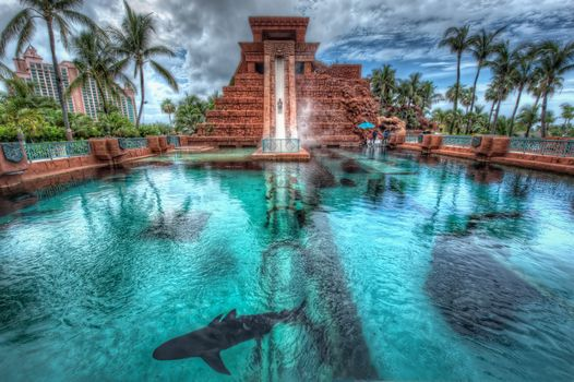Nassau, Bahamas, Palms, pool, shark