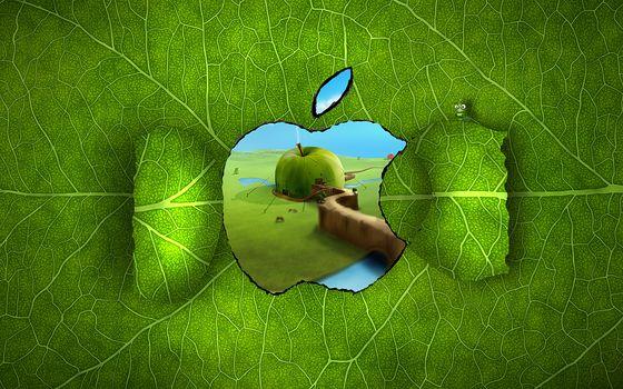 apple, лист, прожилки, окно, дом, гусеница, яблоко, зелень, канаты