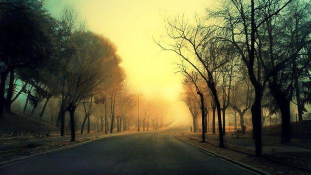 road, Trees, fog