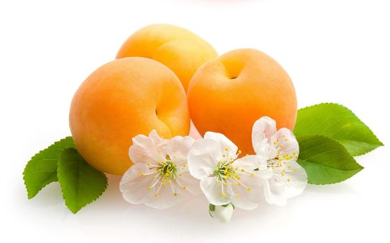 fruit, pit, apricots, Flowers, leaves, fruits, apricots, flowers, leaves