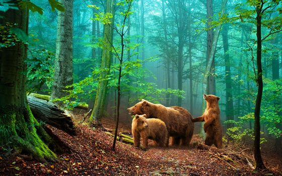 forest, three bears, Trees, landscape