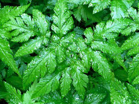 grass, green, wather, grass, Green, drops, rain
