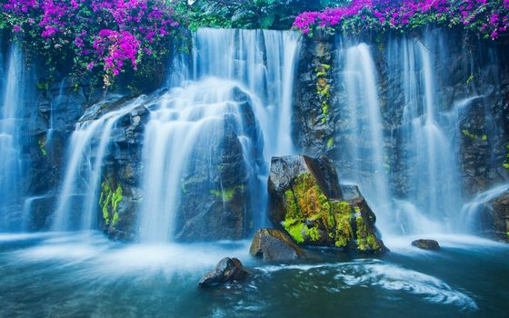stones, moss, Flowers, waterfall