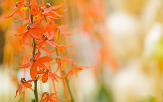 flora, plants, macro, Flowers