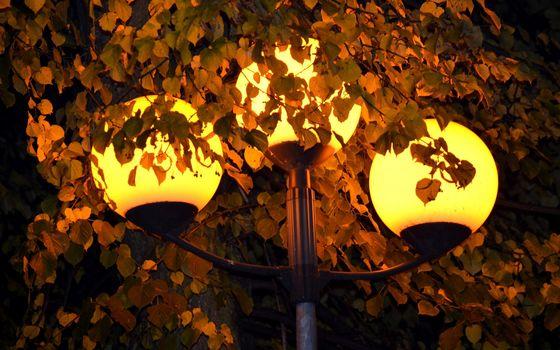 foliage, lantern, lights, light, yellow
