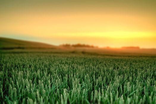 landscape, nature, dawn, grass, paints, sky, landscape, nature, sunrise, grass, colors, sky, 1920x1280