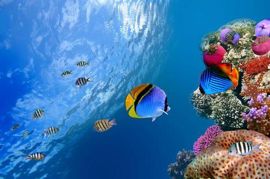 underwater, coral, fish, sea, ocean, one water, coral, fish, sea, ocean