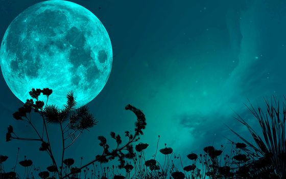 night, sky, moon, shadow, grass, blades of grass