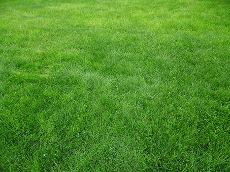 texture, grass, field