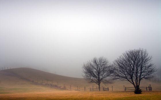 Туман и птицы