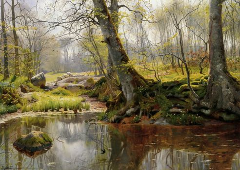 the roots, Trees, picture, lake, forest, stones, moss, landscape, reflection