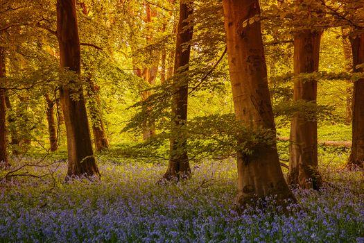 grass, forest, grassington