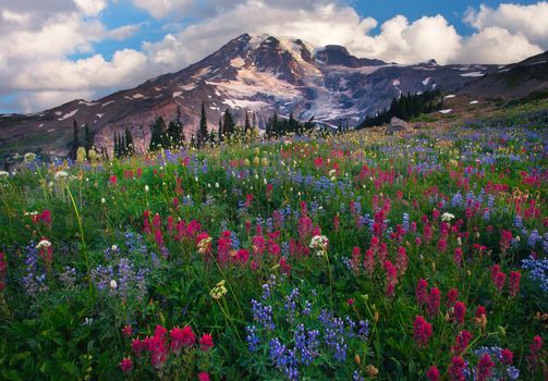 paradise wildflowers - mazama ridge, mount rainier national park, longmire, wa