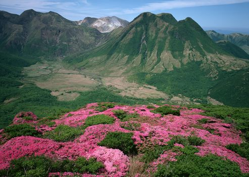 Pink Flowers, On The Green Mountain, landscape