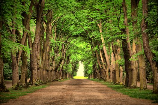 landscape, trees, beautiful, road, nature, green, road