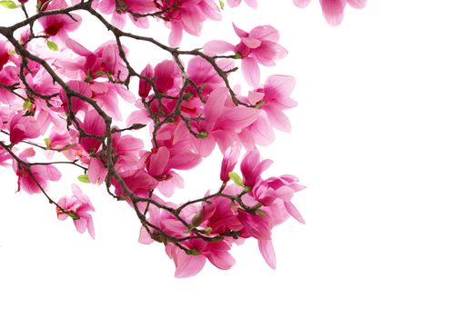 Flowers, pink, branch