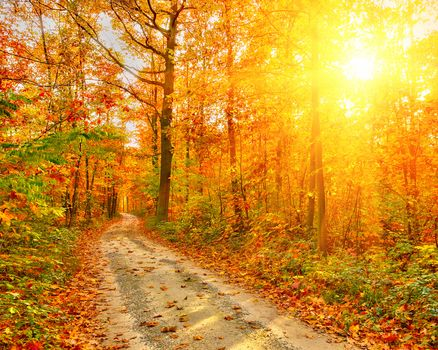 forest, road, autumn, sun