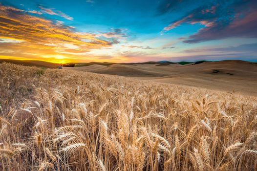 nature, landscape, field, sky, clouds, sunset, wheat, nature, landscape, field, sky, Clouds, sunset, wheat, scenery, view