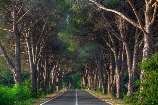 Tuscan Road, Val D'Orcia region, Tuscany, Italy