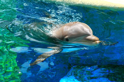 вода, дельфин, волны