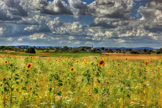 Fields, Sunflowers, sky, Clouds, Bremm, Germany
