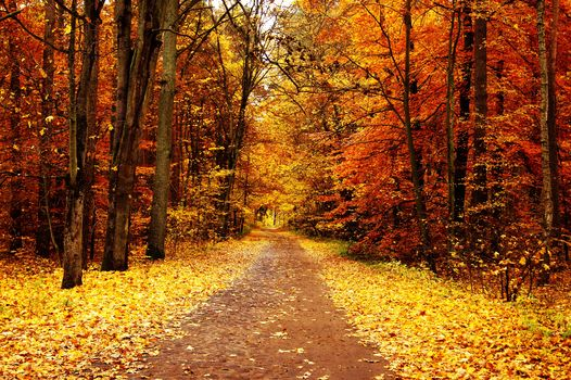 autumn, road, forest, park, landscape