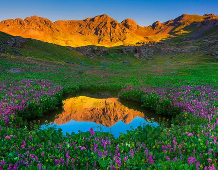 Wildflowers, surround, alpine aond, San Juan mountains, Colorado, USA