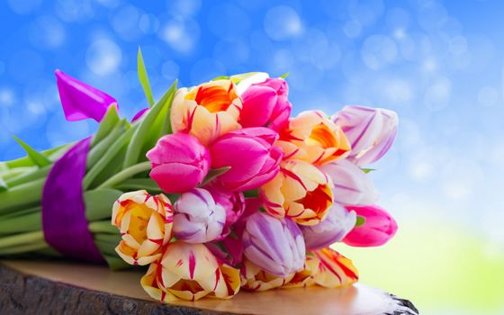 nature, flowers, Flower, colorful, Tulips, bouquet