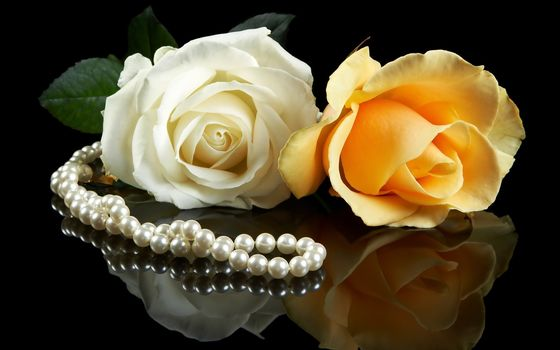 nature, flowers, Flower, rozes, Yellow, white, pearls