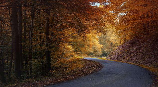 Autumn Turn, forest, road