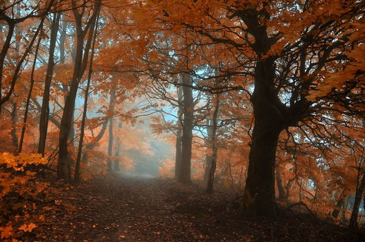 autumn, trail, forest, leaves, light