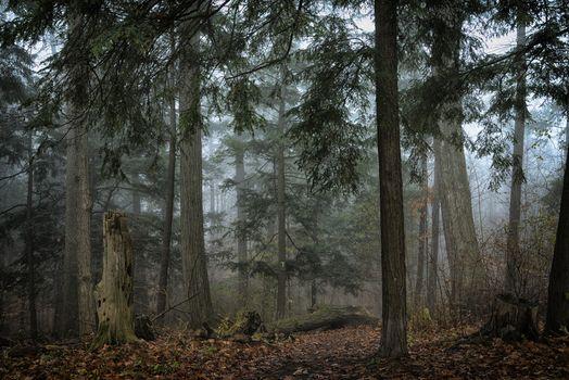 trees, fog, Homer Watson Park, Kitchener Ontario, Canada