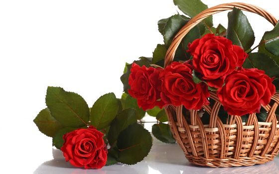 nature, flowers, Flower, red, rose, roses, basket, bouquet
