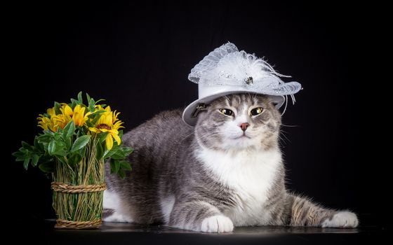 Animals, animal, cats, cat, flowers, Flower, bouquet
