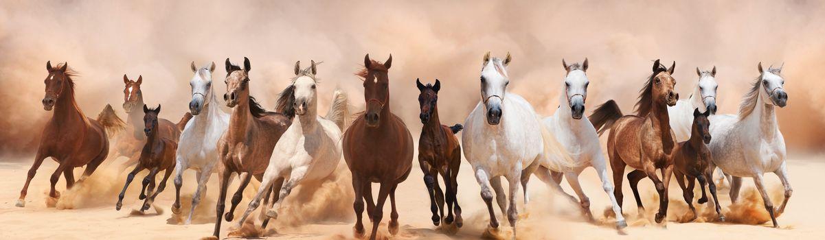 панорама, лошади, кони, животные