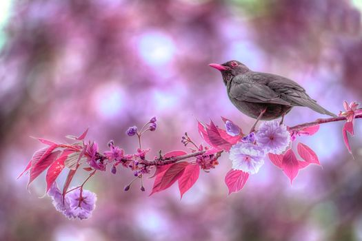 starling, branch, Flowers
