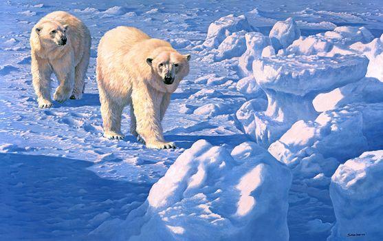 snow, polar, painting, Bears, winter, polar bear